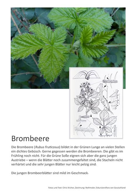 6 Brombeere